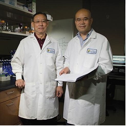 CTBR Scientists Combat Human Metabolic Illnesses.