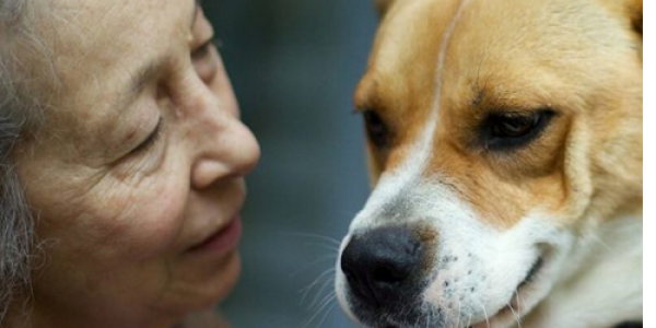 (Old) Man's Best Friend: Five Reasons Older Adults Should Get a Pet