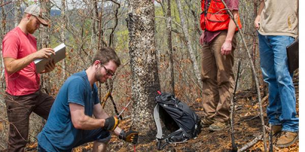 WCU natural resources students conducting research for their capstone course – (from left) Alex Percival, Ben Wirtel, Brandon Fritz and Andrew Cornelius – measure the amount of leaf litter and duff that was consumed during the Dick's Creek fire.