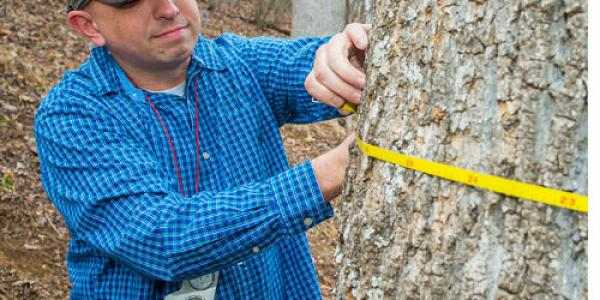 Senior Kirk Gardner has been collecting measurements, diameters, height and identifications for trees on WCU's main campus.